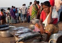 Woman selling skipjack tuna and other fish on the beach, Malabar Coast, Kerala, India. Photo: Dinesh Kapilly